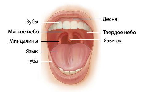 ХРОНИЧЕСКИЙ ТОНЗИЛЛИТ БЕЗ АНГИНЫ [лечение, профилактика]